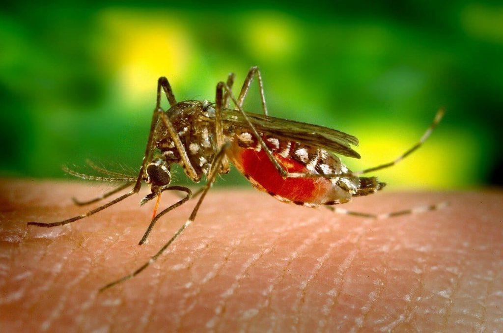 Mückenschutz