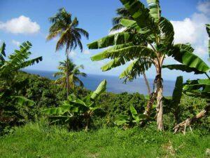 St Lucia Aussicht