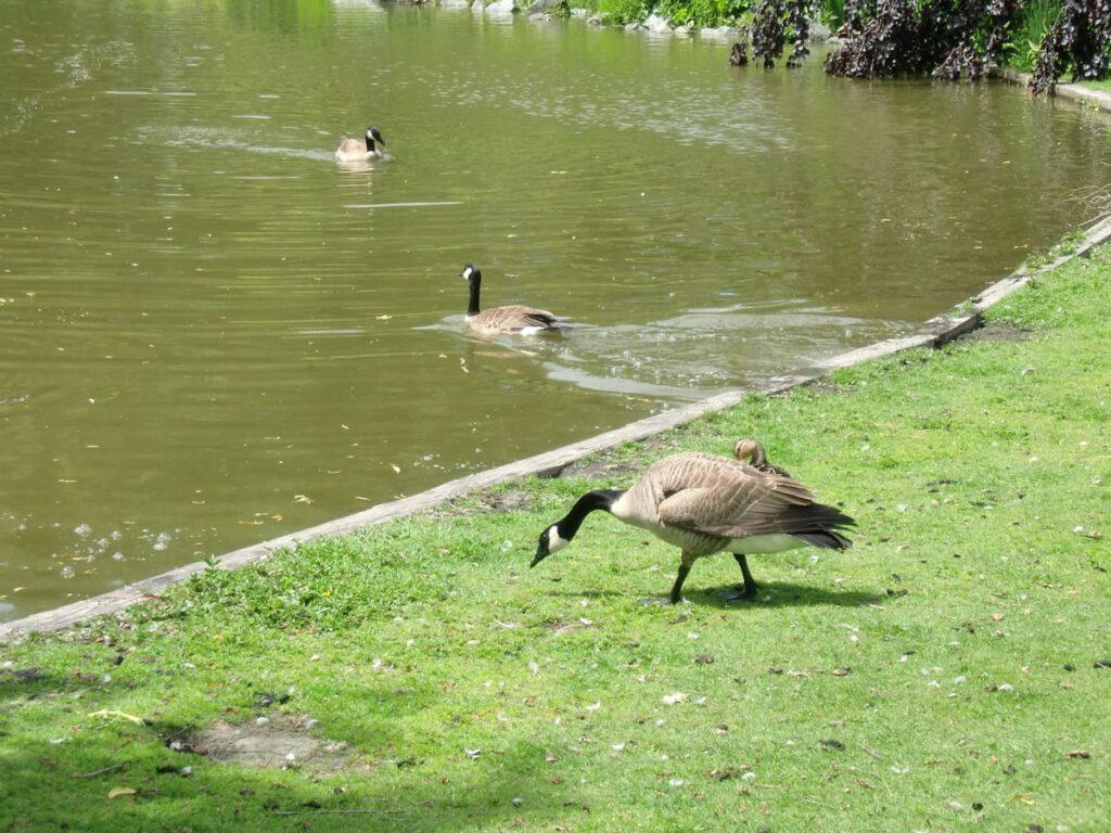 Minoru Park Richmond